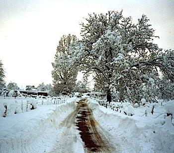 Décembre 1990 : épisode neigeux exceptionnel dans le Centre-Est